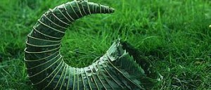 leaves andygoldsworthy